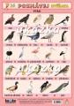 Poznávej 3 - zvířata (exotická, ptáci)