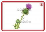 Sada 24 karet - květiny