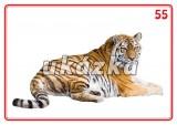 Sada 24 karet - zvířata exotická