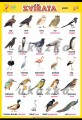 Zobrazit detail - Zvířata - ptáci