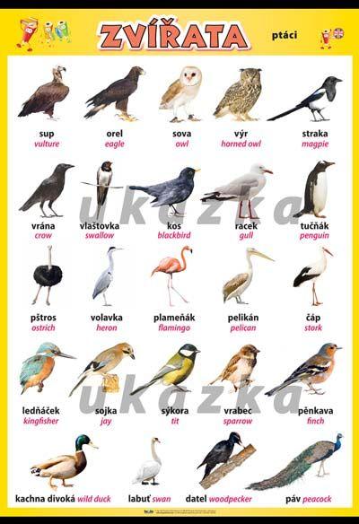 Zvířata - ptáci