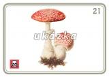 Sada 24 karet - houby