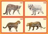 Sada 24 karet - zvířata exotická 2