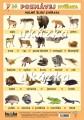 Poznávej 2 - zvířata (domácí, volně žijící) nakladatelství Kupka