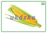 Sada 24 karet - zelenina nakladatelství Kupka