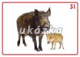 Sada 24 karet - zvířata volně žijící nakladatelství Kupka