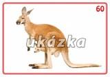 Sada 24 karet - zvířata exotická nakladatelství Kupka