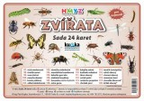 Sada 24 karet - zvířata (hmyz)