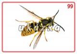 Sada 24 karet - zvířata (hmyz) nakladatelství Kupka