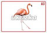 Sada 24 karet - zvířata (ptáci)