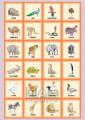 Hravá angličtina 1 - zvířata nakladatelství Kupka