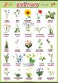 Květiny v angličtině
