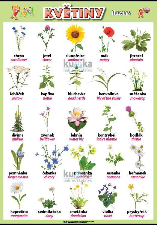 Květiny v angličtině nakladatelství Kupka