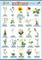 Květiny v němčině