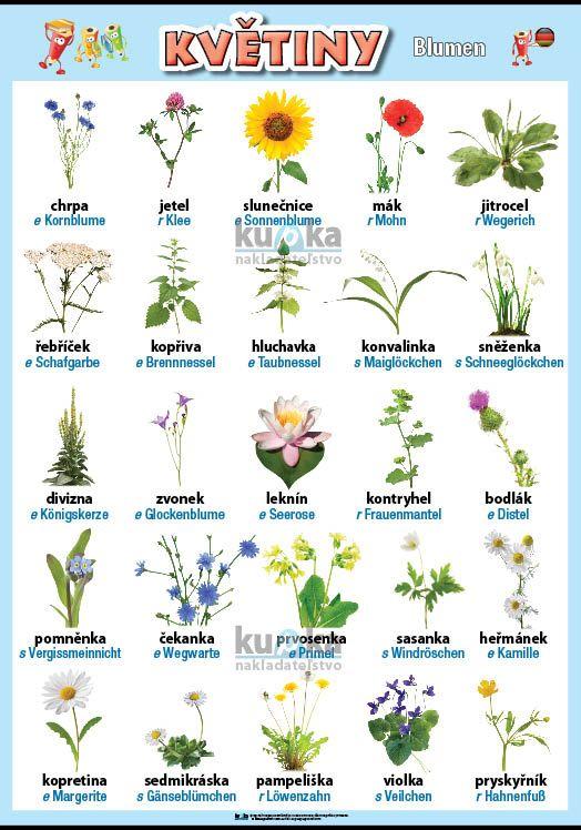 Květiny v němčině nakladatelství Kupka