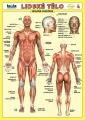 Lidské tělo nakladatelství Kupka