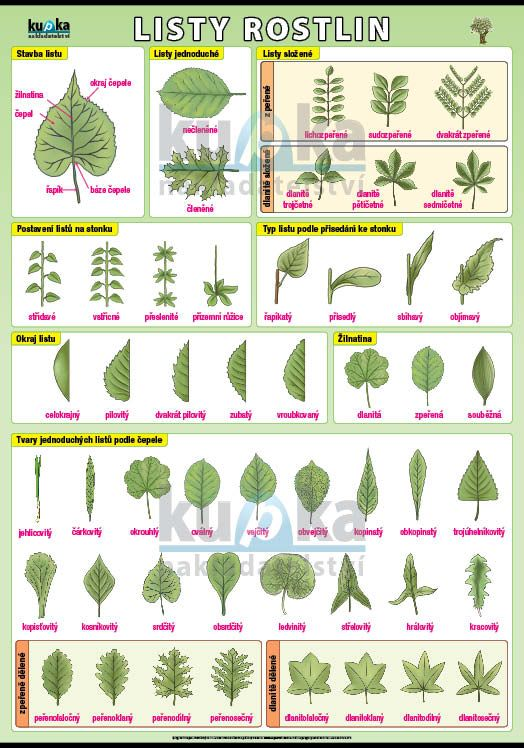 Listy rostlin nakladatelství Kupka
