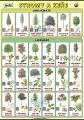Naše stromy a keře (česky a anglicky)