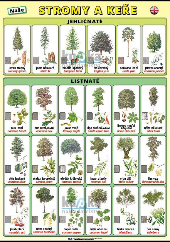 Naše stromy a keře (česky a anglicky) nakladatelství Kupka