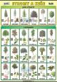 Naše stromy a keře