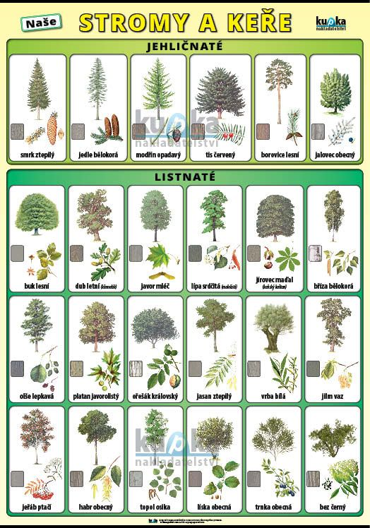 Naše stromy a keře nakladatelství Kupka