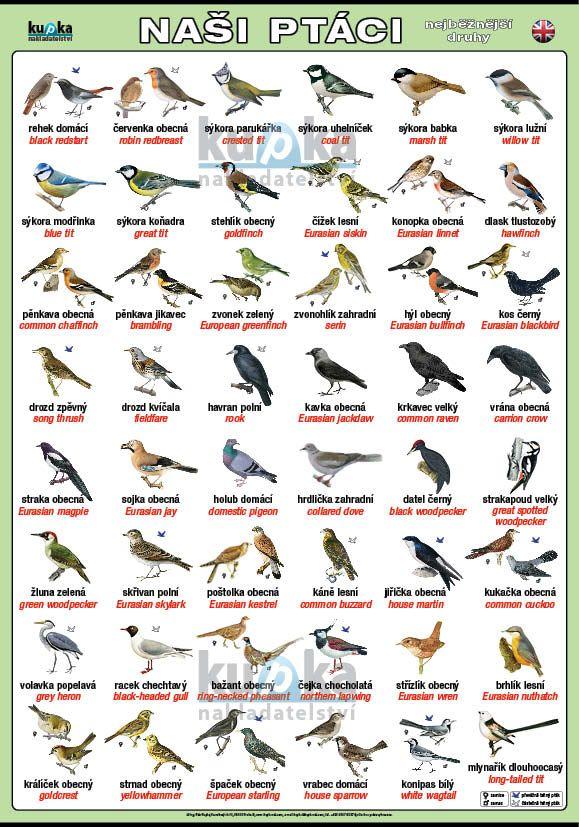 Naši ptáci (česky a anglicky) nakladatelství Kupka
