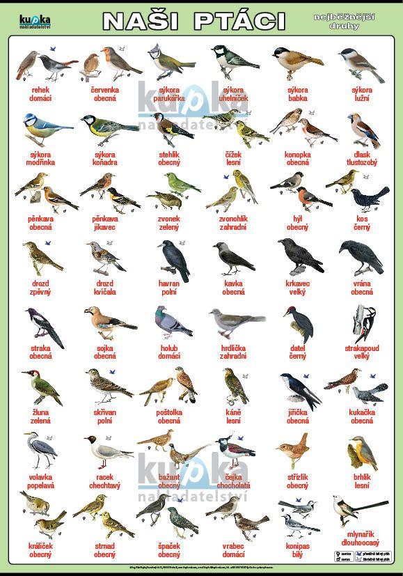 Naši ptáci nakladatelství Kupka
