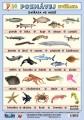 Poznávej 5 - zvířata (exotická 2, ve vodě) nakladatelství Kupka