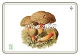 Sada 24 karet - houby nakladatelství Kupka