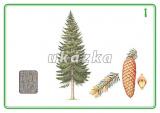 Sada 24 karet - stromy a keře nakladatelství Kupka