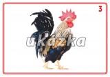 Sada 24 karet - zvířata domácí nakladatelství Kupka