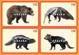 Sada 24 karet - zvířata exotická 2 nakladatelství Kupka