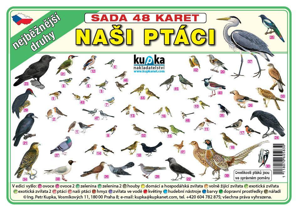 Sada 48 karet - naši ptáci nakladatelství Kupka