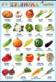Zelenina v němčině