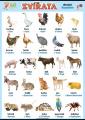 Zvířata v němčině - domácí