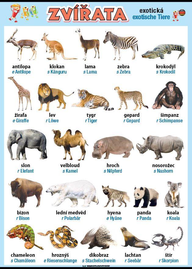 Zvířata v němčině - exotická nakladatelství Kupka