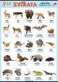 Zvířata v němčině - volně žijící