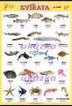 Zvířata - ve vodě